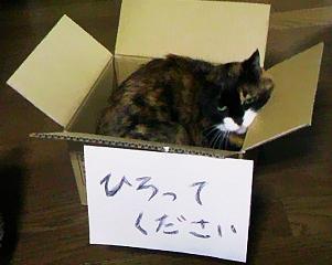 2011111614_2
